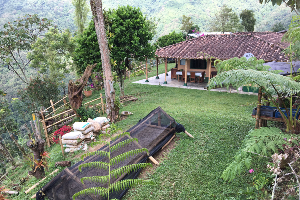Cordial Coffee Co Brandon Belland visits Finca La Vega, a string of coffee farms in Antioquia, Colombia